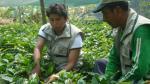 Seis países se presentarán en la primera Feria Internacional de Café - Noticias de satipo