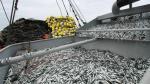 Produce suspende actividades extractivas de la anchoveta en zona del litoral - Noticias de resolución ministerial