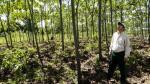 Produce: sector forestal será un 'súper boom' en la generación de empleo - Noticias de empleo formal