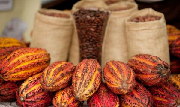 Perú busca elevar la productividad del cacao - Noticias de innovación