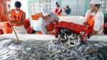Produce suspende actividades extractivas de anchoveta por diez días - Noticias de recursos humanos