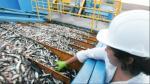 Scotiabank baja proyección de PBI en segundo trimestre por caída de sector pesquero - Noticias de pbi
