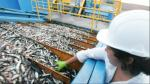 Scotiabank baja proyección de PBI en segundo trimestre por caída de sector pesquero - Noticias de pablo nano
