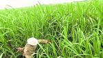 Grupo Oviedo retoma el control de Agroindustrial Tumán - Noticias de grupo oviedo