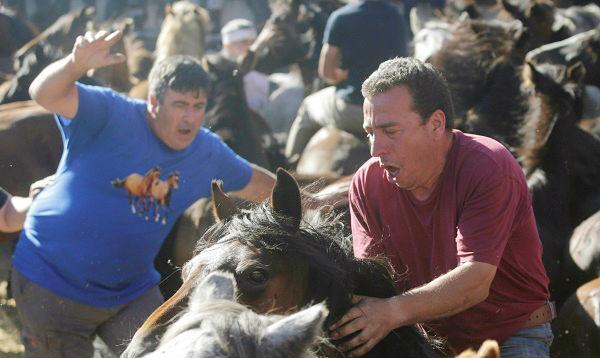 España rapa a sus caballos en tradicional fiesta - Noticias de galicia