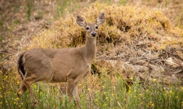 Exhiben diversidad natural del Santuario Histórico de Machu Picchu - Noticias de exposición fotográfica