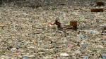 El plástico contamina, pero reemplazarlo no es mejor solución - Noticias de cassandra lynn