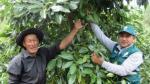 Palta Hass peruana ingresa a la India tras cinco años de negociaciones técnicas - Noticias de manuel calderon