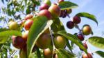 Café tendrá repunte similar al azúcar si falla cosecha en Brasil - Noticias de brasil