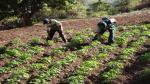 Más de 22 mil productores peruanos fortalecen sus capacidades competitivas para ingresar al mercado - Noticias de sierra andina