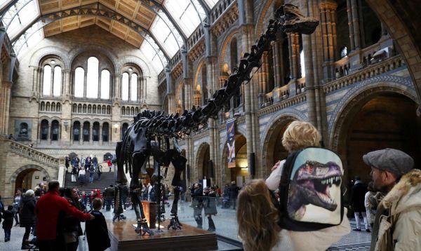 """Museo británico dice adiós al célebre dinosaurio """"Dippy"""" - Noticias de dinosaurio"""