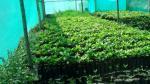 Ancash recibirá 100 mil plantones de palta Hass que se instalarán en este año - Noticias de miguel mercado
