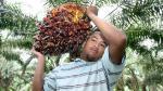 Gigante del aceite de palma eleva perspectiva para este año - Noticias de maximo palma