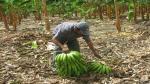 """Inclusión de labores agrícolas en lista de """"alto riesgo"""" generará sobrecostos, advierte Adex - Noticias de juan varilias"""