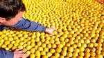 EE.UU. frenó por 60 días importación de limones de Argentina - Noticias de
