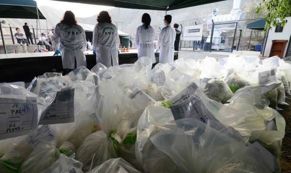 PNP incinera cerca de 8 toneladas de droga incautada al narcotráfico - Noticias de clorhidrato de cocaína