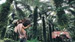 Palma aceitera, cultivo que reforesta zonas arrasadas por la coca - Noticias de bosques amazónicos