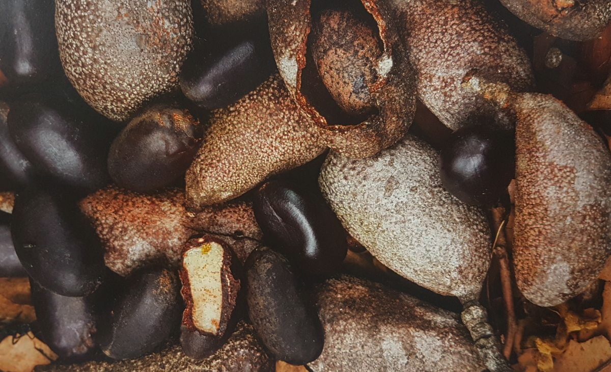 Cu ntas especies de rboles se encuentran en la selva for Cuantas empresas hay en europa