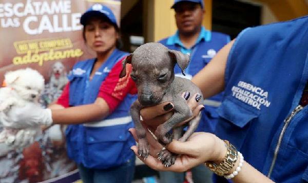 Lima: rescatan a cachorritos en operativo contra venta ilegal de animales